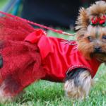 Пошив одежды для собак — отличный заработок!